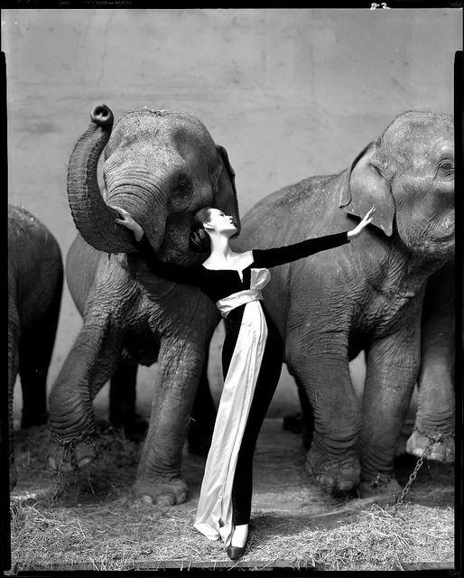 Gosto de Canela - Dovima com Elefantes Richard Avedon e vestido Dior
